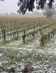 Maltempo, Verona: danni pesanti su 400 ettari di vigneti in Valpolicella