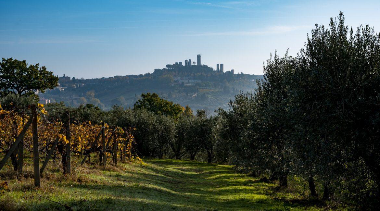 Panizzi e la Vernaccia della contemporaneità. Doppia verticale di Riserva e Vigna Santa Margherita