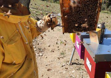 Castello di Meleto inaugura il Parco delle api