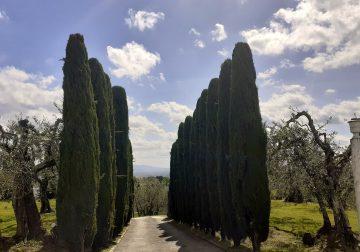 Montechiari blues